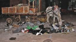Le tourisme glauque - Un mulet mange des ordures