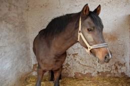 Que faire si vous avez un cheval qui déprime ?