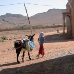 Atlas-4 Photos Récolte du Safran Or Rouge de Taliouine Ouarzazate