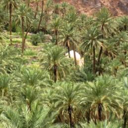 Atlas - Oasis d'Aguinen
