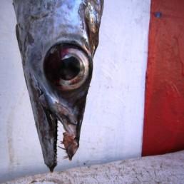 Essaouira-1 Photos Port de pêche poissons chantier naval remparts fortifications