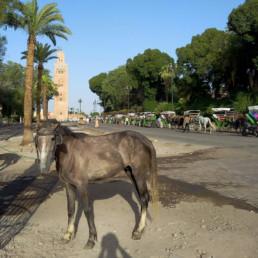 Marrakech 8 - suite
