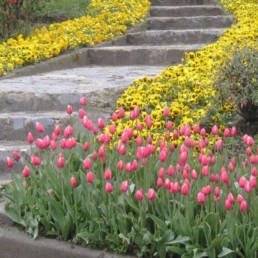 Istanbul 10 - tulipes - Bosphore
