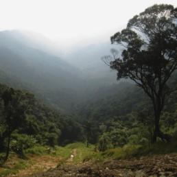 Montagnes de Tam-Dao au Nord de Hanoï Photos Forêts denses. Mais les tigres ont disparu. Villégiature pour éviter la chaleur humide de la capitale